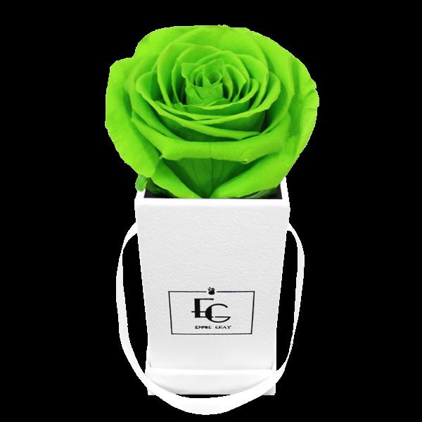 CLASSIC INFINITY ROSEBOX | GREEN GLOW | XXS