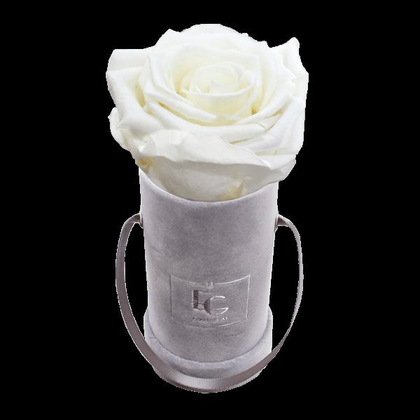 CLASSIC INFINITY ROSEBOX   PURE WHITE   XXS