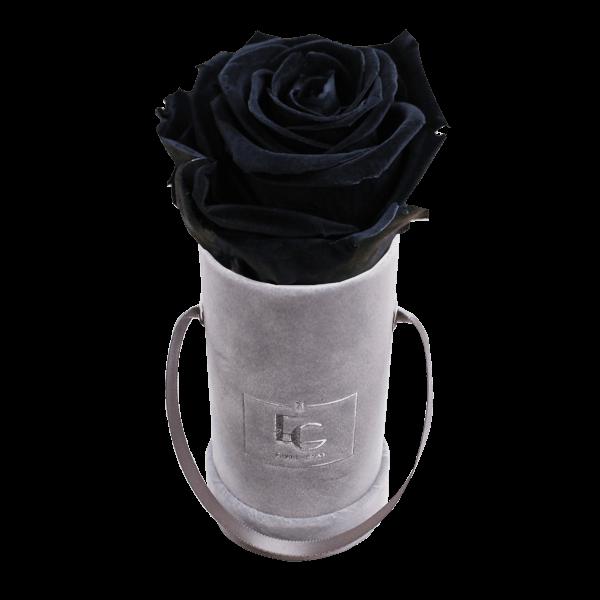 CLASSIC INFINITY ROSEBOX   BLACK BEAUTY   XXS